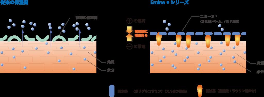 エミーヌ®の皮膚表面(角質)への吸着イメージ(OSFシリーズ)(イメージ)