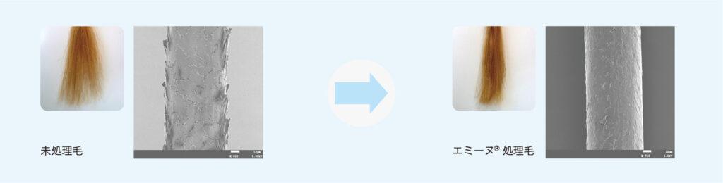 未処理毛→エミーヌ®処理毛(イメージ図)