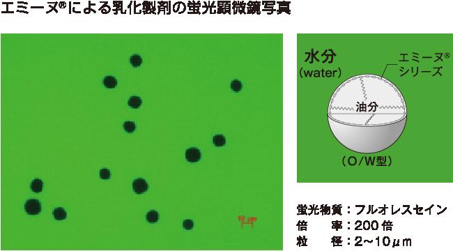 エミーヌ&regによる乳化製剤の蛍光顕微鏡写真